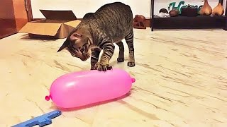 Aww Super Cute ♥ Best Funny Cats and Dogs Compilation #70