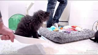 "Tiny kitten ""helps"" with cleaning"