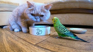 Funny bird prevents the cat from eating😁 Funny animals😍