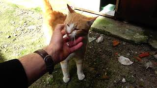 (Cute Cat Videos) I CLEANED UP FOR STRAY CATS WITH MY DAD