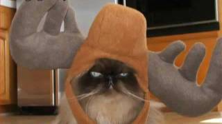 Very Funny Cats 61