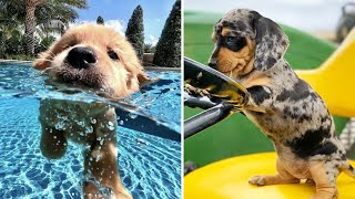 Cute baby animals Videos Compilation cutest moment of the animals Cutest Puppies #7