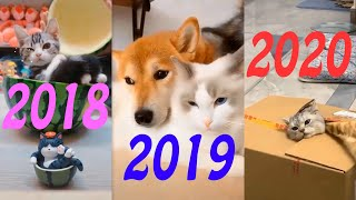 Cute Cat Funny Video The Best Series Cats Life #25 Special Ending Clip