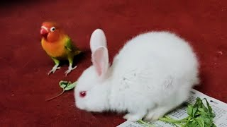 Cute Rabbits playing with birds! Rescue & Rehabilitation! 23