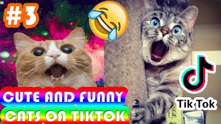 Cute and Funny Cats Video Compilation – Petz Compilation