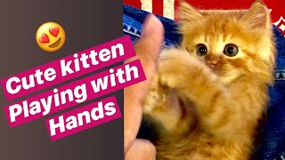 Cute cat loves to play with hands | Life with Paws | kitten love