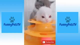 Cute Cats and Dogs, Funny Pets and Animals Compilation No. 1 | FunnyPetsTV