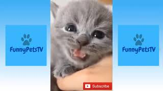 Cute Cats and Dogs, Funny Pets and Animals Compilation No. 6 | FunnyPetsTV