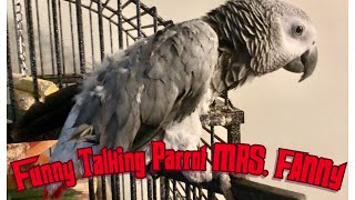 FUNNY AFRICAN GREY PARROT  TALKING!! HILARIOUS!!