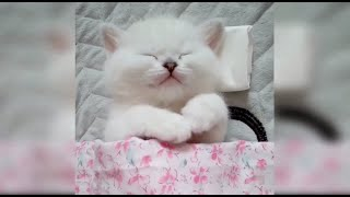 10 Funniest Cats Compilation # 1 |Funny Cats |Funny Animals |Amazing Cats | Cute Pets | Cute Cats