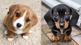 😍 Cute Puppies Doing Funny Things 2020 😍 #2 Cutest dogs