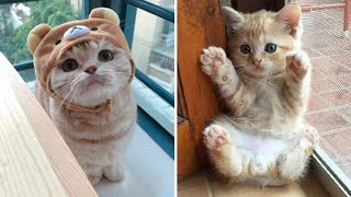 Cute Kittens Doing Funny Things 2020 🐱 #7  Cutest Cats