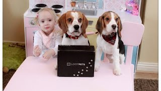 Cute Dogs and Baby do Lootpets Unboxing