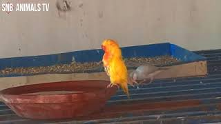 My Orange Parrot Living with Cute Birds