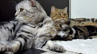 Cutest Cat Moments. The Big Cutest cats Family ever.