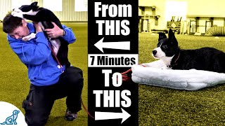 Teach Your Puppy To Calm Down With This 7 Minute Exercise