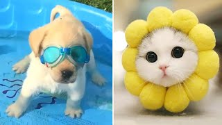Baby Animals 🔴 Funny Cats and Dogs Videos Compilation (2020) Perros y Gatos Recopilación #37