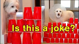 Our Funny Dogs React to the Plastic Cup Challenge