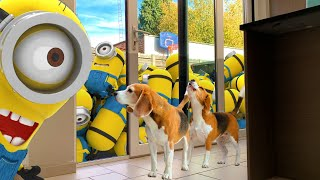 Dogs Vs Minion Prank : Funny Dogs Louie and Marie Ep5