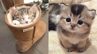 Cute Kittens Doing Funny Things 2020 🐱 #1  Cutest Cats