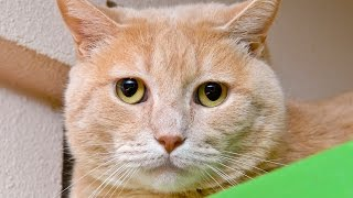 Cute cat videos and science