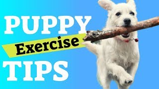Puppy Exercise – Tips to Tire Out a Puppy