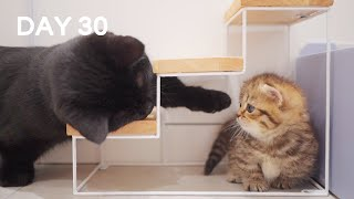 Curious Baby Kittens – Day 30 @ Baby Kittens Day 1 to Day 100 Lucky Paws Vlogs