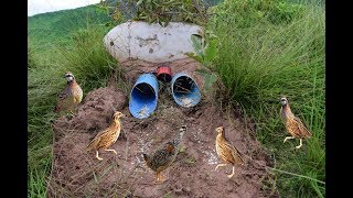 Plastic Bottle Deep Hole Quail Bird Trap Easy – How To Make Bird Trap By Plastic Bottle & PVC