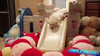 Dogs Compilation Funny Cute Dogs Animals HD 🐶🐕
