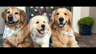 CUTE AND FUNNY DOG VIDEO COMPILATION 2020 #PART 1