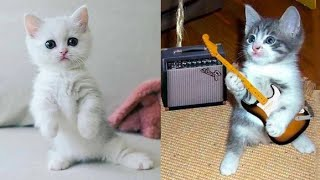 Baby Cats – Cute and Funny Cat Videos Compilation 2020