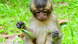 So Cute Adorable Baby Prin! So Pity Cute Baby Monkey
