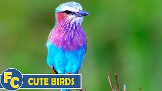 Cute and Funny Bird Videos Compilation | 2020