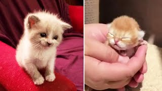 😍 Cute Kittens Doing Funny Things 2020 😍 #2 Cutest Cats