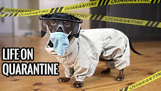 Ep#1: QUARANTINE LIFE – Funny Wiener Dogs Staying Home!
