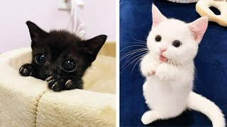 😍 Cute Kittens Doing Funny Things 2020 😍 #4 Cutest Cats