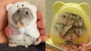 Funny and Cute Hamster Compilation 🐭 – Cutest Hamster In The World 2020 #4 | Cute VN