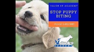 How to STOP puppy biting NOW!