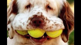 vERY fUNNY dOGS 3