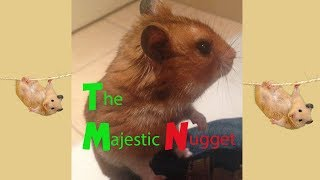 The Majestic Nugget – Funny Hamsters