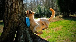Funny Pets Fails 😂🐶 Funny Dogs Who Fail at Being Dogs (Part 2) [Funny Pets]