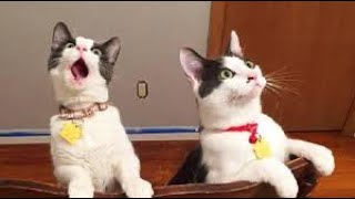 Cute cats! – Relaxing pet video, funny cats, dogs, animals