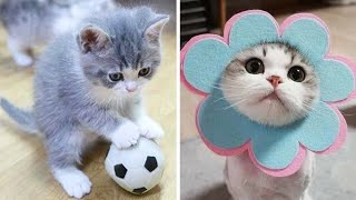 😍 Cute Kittens Doing Funny Things 2020 😍 #10 Cutest Cats