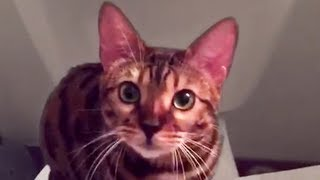 Cute and Funny Cat Videos to Watch While Quarantined!! 🐱