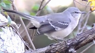 Bird scratching head & rubbing beak and moving on tree | Cute moments