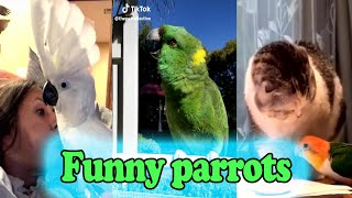 Funny Parrots Tik-Tok Videos Compilation | Birds Dancing To Music 🦅🐦🐥