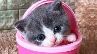 OMG So Cute Cats ♥ Best Funny Cat Videos 2020 #21