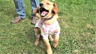 Playful puppy is very proud of her new pajamas