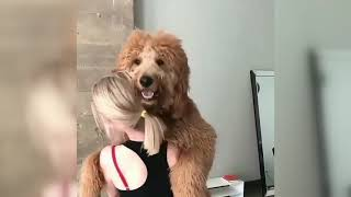 Is this REAL? Cute DOGS | Top HIT