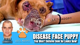 Hope Rescues Disease Face Puppy – @Viktor Larkhill Extreme Rescue